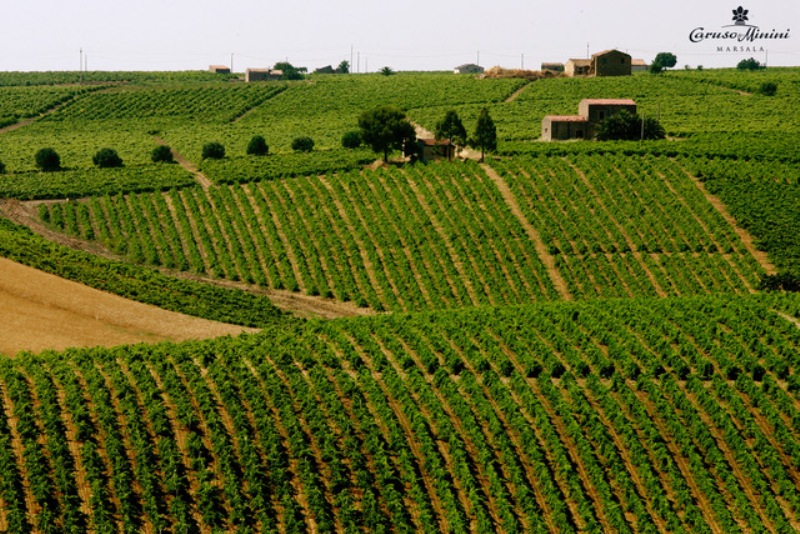 carusominini-simon-boccanegra-degustacao-dez16-fotos-vinicola-vinhedos
